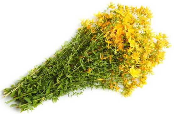 польза травы зверобоя для волос