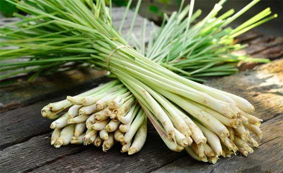 лемонграсс для волос, растение, масло