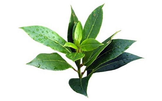применение масла чайного дерева для волос