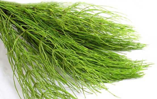 польза травы хвоща полевого для волос